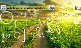 Copy of Modo de acción de Bacillus thuringiensis.