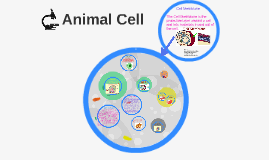 Animal Cell with Analogy