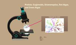 Copy of Protists: Euglenoids, Stramenopiles, and Red Algae