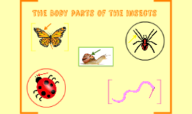 The parts of the Butterfly