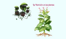 Nutrición en las plantas (2 ESO)
