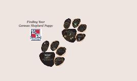 Finding your German Shepherd Puppy