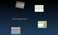 Dassel-Cokato Pond
