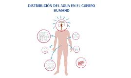 Copy of DISTRIBUCIÓN DEL AGUA EN EL CUERPO HUMANO