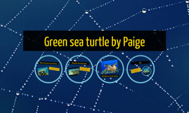 Copy of Green sea turtle