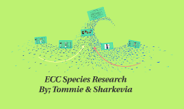 ECC Species Research