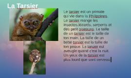 La Tarsier