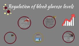 Regulation of Blood Glucose