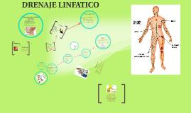 Copy of Copy of sistema linfatico