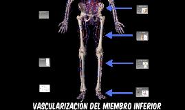 Copy of VASCULARIZACIÓN MIEMBRO INFERIOR