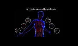 Régulation du pH sanguin dans les reins