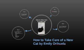 How to Care for a New Cat