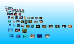 Copy of Fish Slideshow