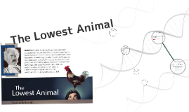 The Lowest Animal