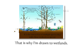 Drawn to Wetlands