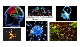 Copy of Sympathetic and Parasympathetic nervous systems