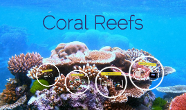 Copy of Coral Reefs
