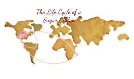The Life Cycle of a Sugar Cookie