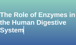 The Role of Enzymes in the Human Digestive System